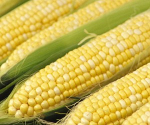 phase 2 south beach diet corn